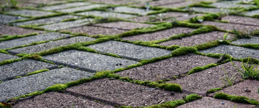 pic-mauvaises-herbes